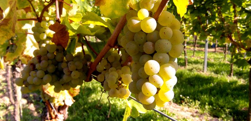 DO Catalunya, tradición vitivinícola del Mediterráneo a los Pirineos