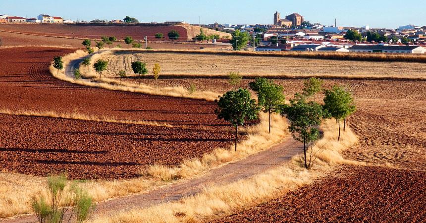 Vinos de La Mancha